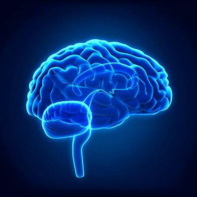cerebro-reptiliano